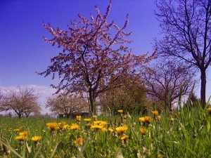 spring-79284_640